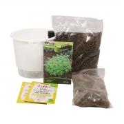 Kit Completo Inicial Branco: Meu Primeiro Plantio de Orégano + Manual de plantio