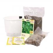 Kit Completo Inicial Branco: Meu Primeiro Plantio de Salsa + Manual de plantio