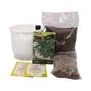Kit Completo Inicial Branco: Meu Primeiro Plantio de Sálvia + Manual de plantio