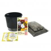 Kit Completo Inicial: Meu Primeiro Plantio de Amor Perfeito com Vaso Preto + Manual de plantio