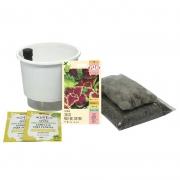Kit Completo Inicial: Meu Primeiro Plantio de Coleus com Vaso Branco + Manual de plantio