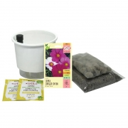 Kit Completo Inicial: Meu Primeiro Plantio de Cosmos com Vaso Branco + Manual de plantio