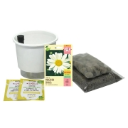Kit Completo Inicial: Meu Primeiro Plantio de Margaridas com Vaso Branco + Manual de plantio
