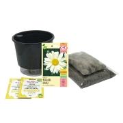 Kit Completo Inicial: Meu Primeiro Plantio de Margaridas com Vaso Preto + Manual de plantio