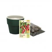 Kit completo Meu Primeiro Plantio de Pimenta Jalapenho com Vaso Autoirrigável Verde Botânico Linha Plantar