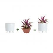 Kit Completo para plantio de Abacaxi Roxo com vaso autoirrigável Grande Branco