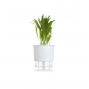 Kit Completo para plantio de Areca com vaso autoirrigável Médio Branco