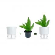 Kit Completo para plantio de Aspargo Real com vaso autoirrigável Médio Branco