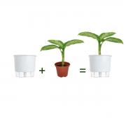 Kit Completo para plantio de Comigo Ninguém Pode com vaso autoirrigável Grande Branco
