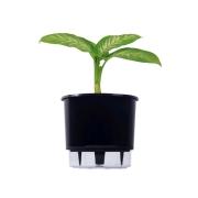 Kit Completo para plantio de Comigo Ninguém Pode com vaso autoirrigável Grande Preto