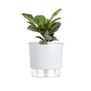 Kit Completo para plantio de Cróton com vaso autoirrigável Grande Branco