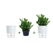Kit Completo para plantio de Flor de Maio com vaso autoirrigável Médio Branco