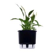 Kit Completo para plantio de Lírio da Paz com vaso autoirrigável Grande Preto