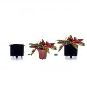 Kit Completo para plantio de Maranta Calathea Triostar com vaso autoirrigável Médio Preto