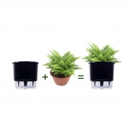 Kit Completo para plantio de Mini Samambaia Havaiana com vaso autoirrigável Médio Preto