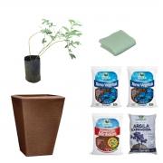 Kit Meu Pé de Mirtilo Blueberry Climax com Vaso 28 litros