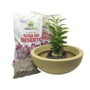 Kit Meu Primeiro Plantio de Rosa do Deserto