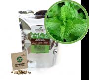 Kit para Plantio de Hortelã Menta Green Leaf