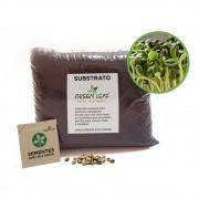 Kit para Plantio de Microverdes de Girassol Anão de Jardim Green Leaf
