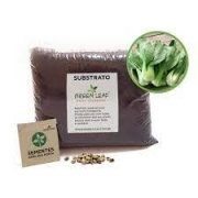 Kit para Plantio de Pak Choi Mini Yoko Oriental Green Leaf
