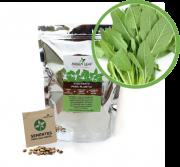 Kit para Plantio de Sálvia Green Leaf