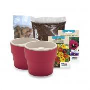 Kit Plantio de Flores Comestíveis com Vasos Linha Plantar Marsala