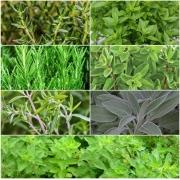 Kit Sementes Ervas de Provence 7 variedades Topseed Garden