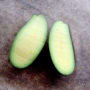 Muda de Abacate sem Caroço feita por enxerto