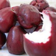 Muda de Jambo Vermelho feita de semente