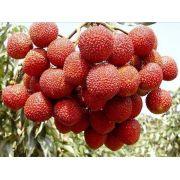 Muda de Lichia Kwai Mai Pink para climas quentes feita por alporque