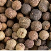 Muda de Pimenta Jamaica feita por Semente
