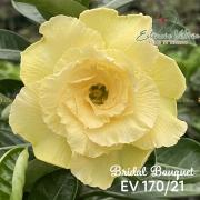 Muda de Rosa do Deserto Bridal Bouquet EV-17021
