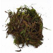 Musgo Esfagno Verde para Orquídeas e Plantas Carnívoras 40 Litros