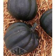 Sementes de Abobrinha Pérola Negra Híbrida Envelope com 20 Sementes (2,5g) - Isla Pro