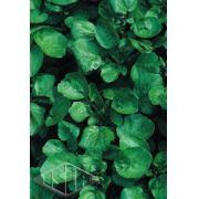 Sementes de Agrião da Água Folha Larga Peletizada - Lata com 3000 Peletes Isla