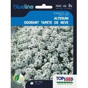 Sementes de Alyssum Odorant Tapete de Neve 2g - Topseed Blue Line