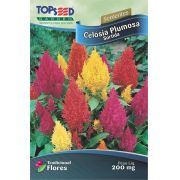 Sementes de Celósia Plumosa Sortida 200mg - Topseed Linha Tradicional Flores