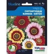 Sementes de Chrysanthemum (Crisântemo) Burridge Sortido 4g - Topseed Blue Line