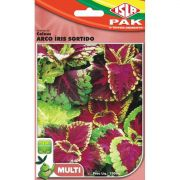 Sementes de Coleus de Java Arco-Íris Sortido - Isla Multi