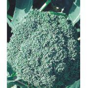 Sementes de Couve - Brócolis Híbrida Green Storm - Isla Superpak