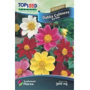 Sementes de Dahlia Coltness Sortida - Linha Tradicional Flores Topseed