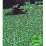 Sementes de Grama Jesuíta Missioneira Carpete Folha Larga pacote 100g - Isla Pro