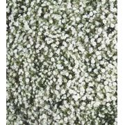 Sementes de Gypsophila Paniculata Snowflake Dobrada Branca 200mg - Isla Superpak