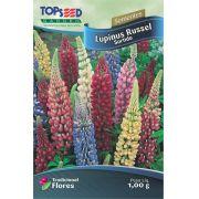 Sementes de Lupinus Russel Sortido - Linha Tradicional Flores Topseed