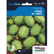 Sementes de Maxixe do Norte 10g - Topseed Blue Line