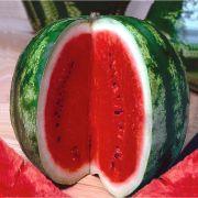 Sementes de Melancia Crimson Sweet 1g - TSV Sementes Linha Quintal