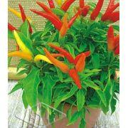Sementes de Pimenta Espaguetinho Ornamental Envelope com 50 Sementes importadas - Isla Pro