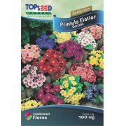 Sementes de Prímula Elatior Sortida - Linha Tradicional Flores Topseed