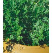 Sementes de Salsa Lisa Stella 2,50g - Isla Multi