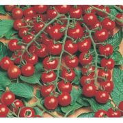 Sementes de Tomate Híbrido Pepita F1 - Topseed Blue Line Gourmet